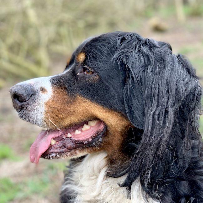 Woefff-hondenuitlaatservice-vleuten-de-meern-leidsche-rijn-Charlie
